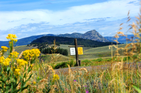 blacktop: Rustic sign warns visitors, Caution Wildlife on Roadway.  Highway runs through Lamar Valley with scenic vistas of mountains, hills and wildflowers.
