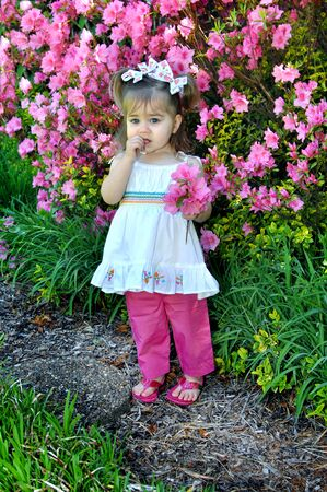 Little girl stands chewing on her thumb and worrying.  She is besides an azalea bush filled with pink flowers.  Child is hold a small bouquet. Stock Photo