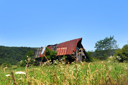 Arkansas barn, in the Ozark Mountains, has torn tin roof that is rusting and worn.  Boards are broken and weeks surround barn.  Arkansas wildflowers bloom in front.