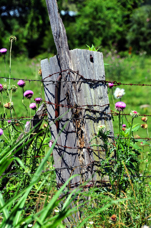 Thick, wooden fence post has extra large rusty nail protruding from its side.  Barbed wire fence is attached to post and wildflowers grow around it. Stock Photo