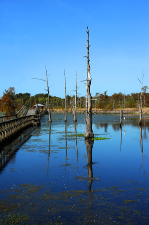 Beautiful Black Bayou Lake has reflection from the cypress trees and the wooden boardwalk that stretches and curves, allowing visitors access to the scenic beauty. Stock Photo