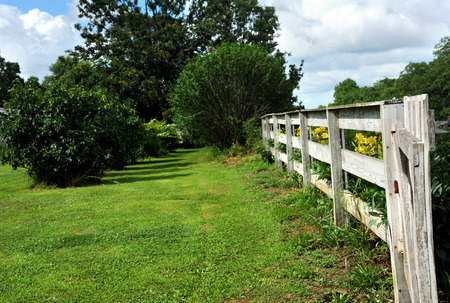 Long, white, wooden fence disappears into the country side landscaping.  Yellow day lillies line outside of fence.