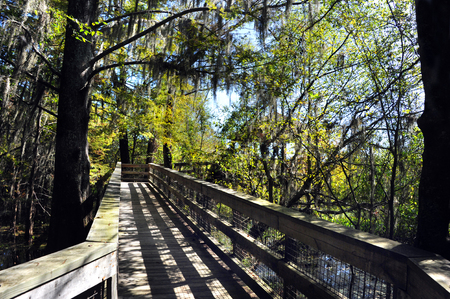 Rustic, wooden boardwalk twists through a tunnel of trees and branches along the Black Bayou Lake in the Black Bayou Lake National Wildlife Refuge in Monroe, Louisiana.