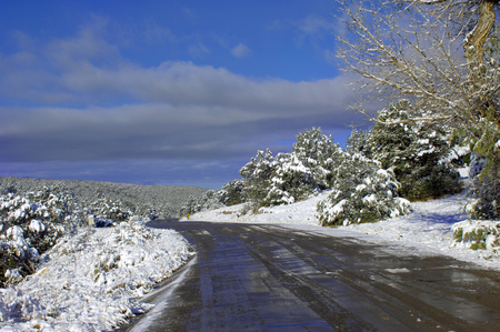 Sky reflects in this dirt lane that twists down the Sandia Mountains in New Mexico.  Winter scene has snow laden fir trees and blue sky.