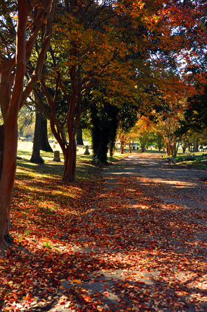 Curving land inside the Elmwood Cemetery in Memphis Tennessee is sprinkled with red and gold leaves in October.