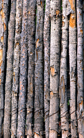 Rustic wooden poles form background image.  Each pole in fence still has its bark mostly intact. 스톡 콘텐츠