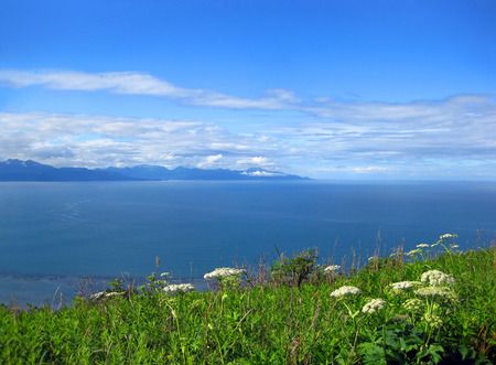 Blue skies reflect on the waters of Cook Inlet near Homer, Alaska. Queen Ann's Lace bloom in lower third of image.  Mountains sit beneath layered clouds. Stock fotó