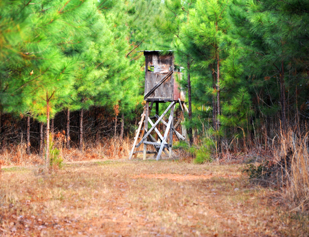 Deer stand is tucked away in a dense pine thicket in East Texas.  Stand is built of 2x4s and plywood.