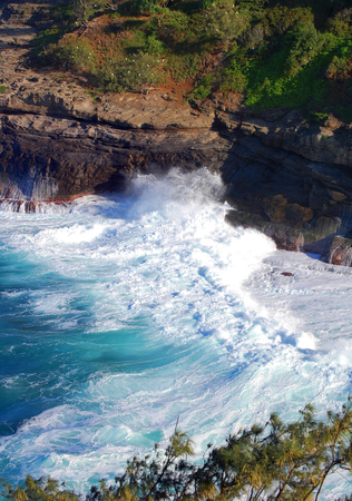 Waves rush in to the shoreline of Kilauea Point Wildlife Sanctuary on the Island of Kauai.  White dots on the trees and cliffs are protected birds. Stock Photo