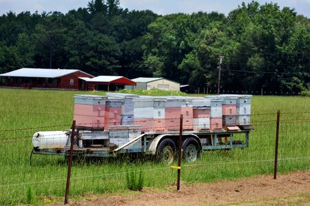 Neat stack of pink and white bee hives sit on a trailer in a field in Arkansas. Banque d'images - 128873056