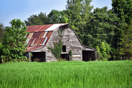Barn has tin roof that is turning brown with rust. Weeds are growing up the front and boards are faded. It sits in a green field.