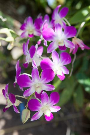 Orchid in the natural garden Banco de Imagens - 83744209