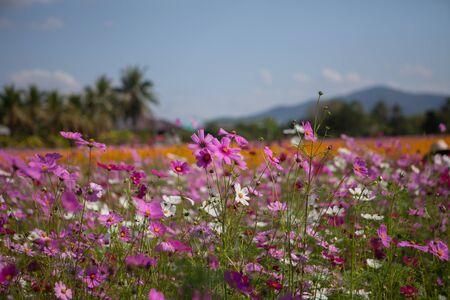 Purple flowers Banco de Imagens - 83744213