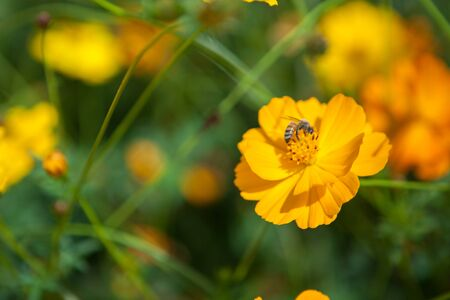 A bee in the flowers in the garden. Banco de Imagens - 83744219