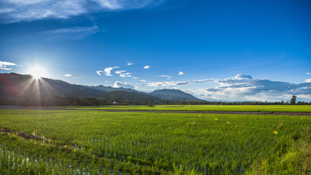 View of the rice field Banco de Imagens - 83848584