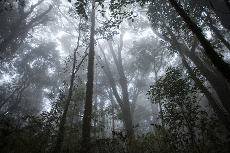Fog in the forest Banco de Imagens - 83848590
