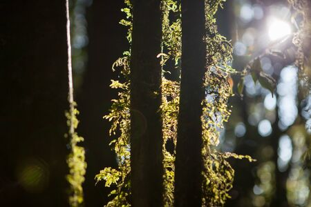 Moss and fern in the forest
