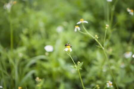White flowers and bee Banco de Imagens