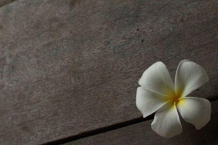 lovely: beautiful  white flower so lovely Stock Photo