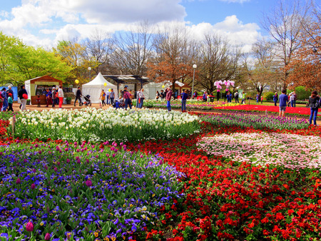 CANBERRA - AUSTRALIA: SEPTEMBER 14,2013: Blossom of tulips at Floriade FestivalCanberra, Australia. Floriade is Australia biggest celebration of spring. This iconic Canberra event.
