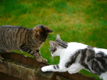 muggy: Bengal and Muggy Cats Friendliness