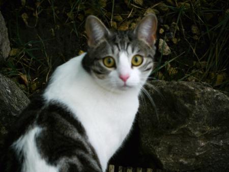 muggy: Curious Muggy Cat