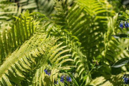 Green bush fern, long leaves. Sunny. Nature texture Stock fotó