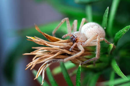 big spider sits on a flower bud Banque d'images