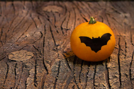 Halloween card. Orange pumpkin with bat. They lie on the bark of a tree