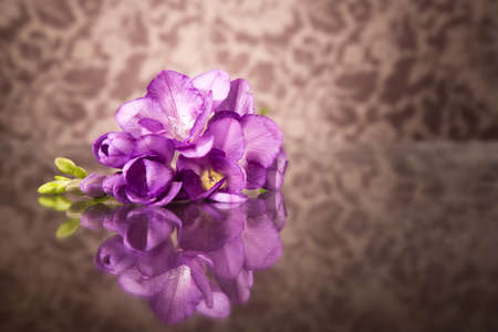 freesia: Beautiful purple freesia