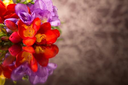freesia: Blooming Freesia.
