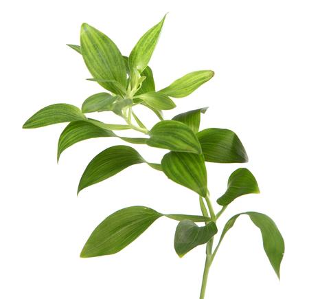 Pianta verde isolato over white