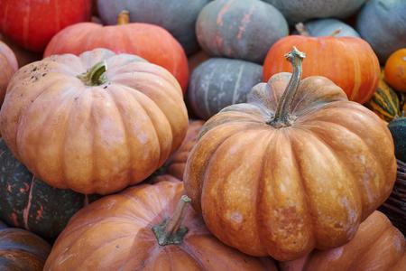 Many Pumpkins on the fair .