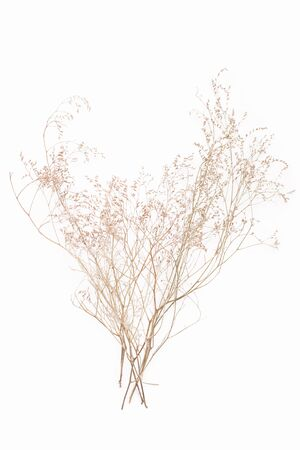 bolls: abstract brown twig of dried bush with small open bolls seeds, flowers, isolated elements on white background for scrapbook, object, roughage autumn leaf Stock Photo