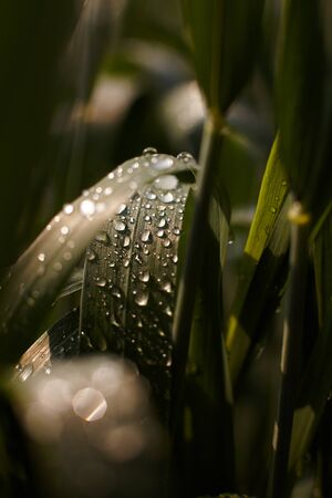 morning dew on the grass under the sun