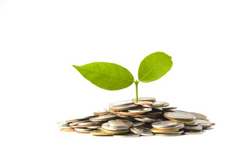 Plant is growing on pile of coins isolated on white. Investment concept