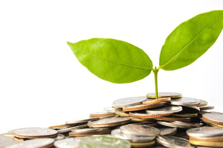 Plant is growing from saving coins isolated on white. Investment concept