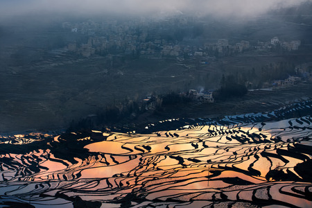 rice terrace: Colorful rice terrace