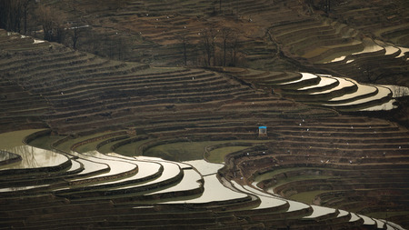 ricefield: Terraced ricefield in Yunnan,China