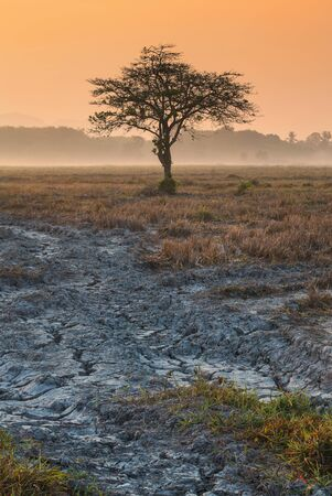 red soil: Soil crack on dry field and alone tree with sunrise Stock Photo