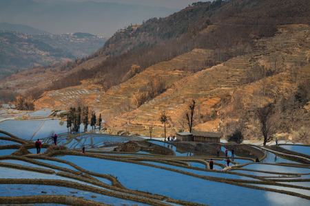 terracing: Tourist on rice terrace in China