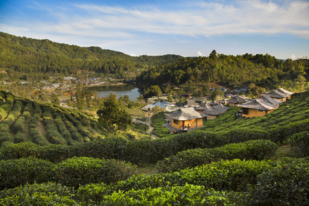 Beautiful scenic view of house in tea field on mountain in Mae Hong Son,Thailand. 版權商用圖片
