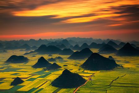 황금 수 탉 언덕의 풍경 : Luoping, 윈난, 중국.