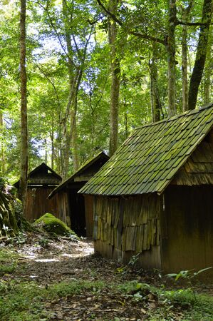 tropical evergreen forest: cabin in the forest, cabin in the woods