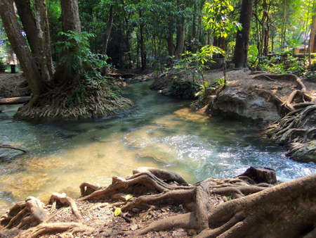 clear water: clear water and beautiful roots