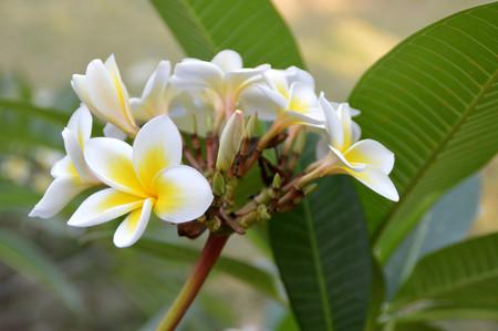 ิbeautiful tropical flowers