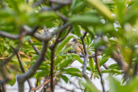 habbit: bird habbit Stock Photo