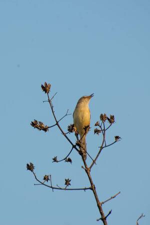 weaver bird: Weaver bird