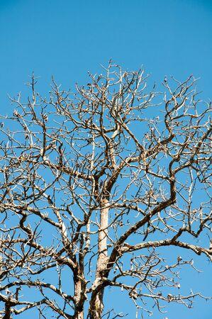 leafless: leafless tree