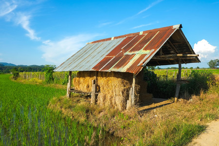 a house with a straw: Straw House.